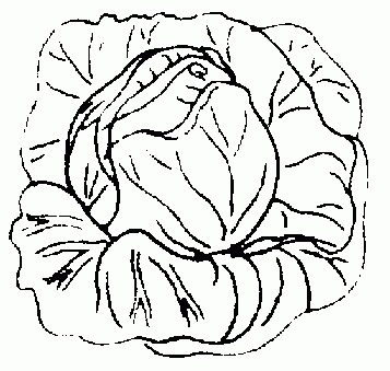 Cabbage clipart black and white, Cabbage black and white.