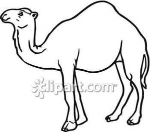 Classic Black and White Camel.