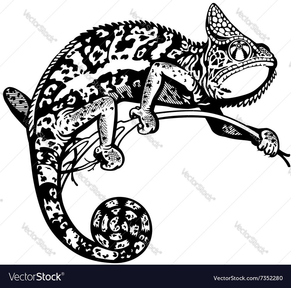 Chameleon black white.