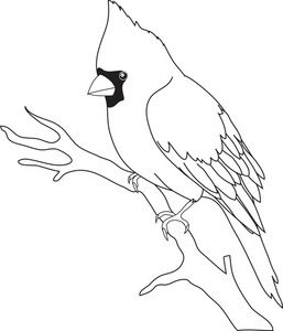 Cardinal black and white clipart.