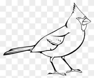 Free PNG Cardinal Bird Clipart Clip Art Download.
