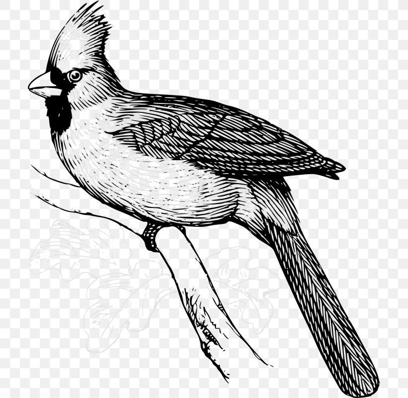 Bird Northern Cardinal Clip Art, PNG, 709x800px, Bird, Art.