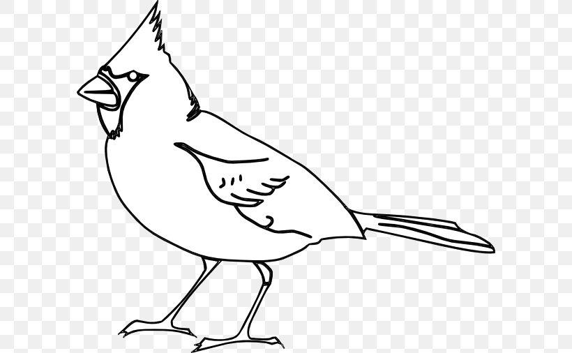 St. Louis Cardinals Bird Northern Cardinal Clip Art, PNG.