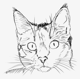 Free Cat Face Black And White Clip Art with No Background.