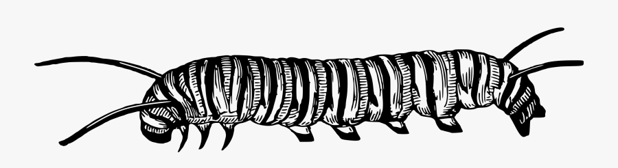 Black And White Caterpillar Clipart Larva Clipart Black.