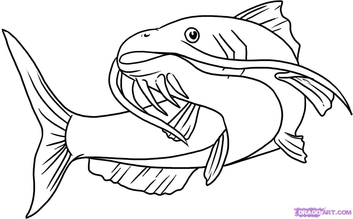 Catfish clipart coloring page, Catfish coloring page.