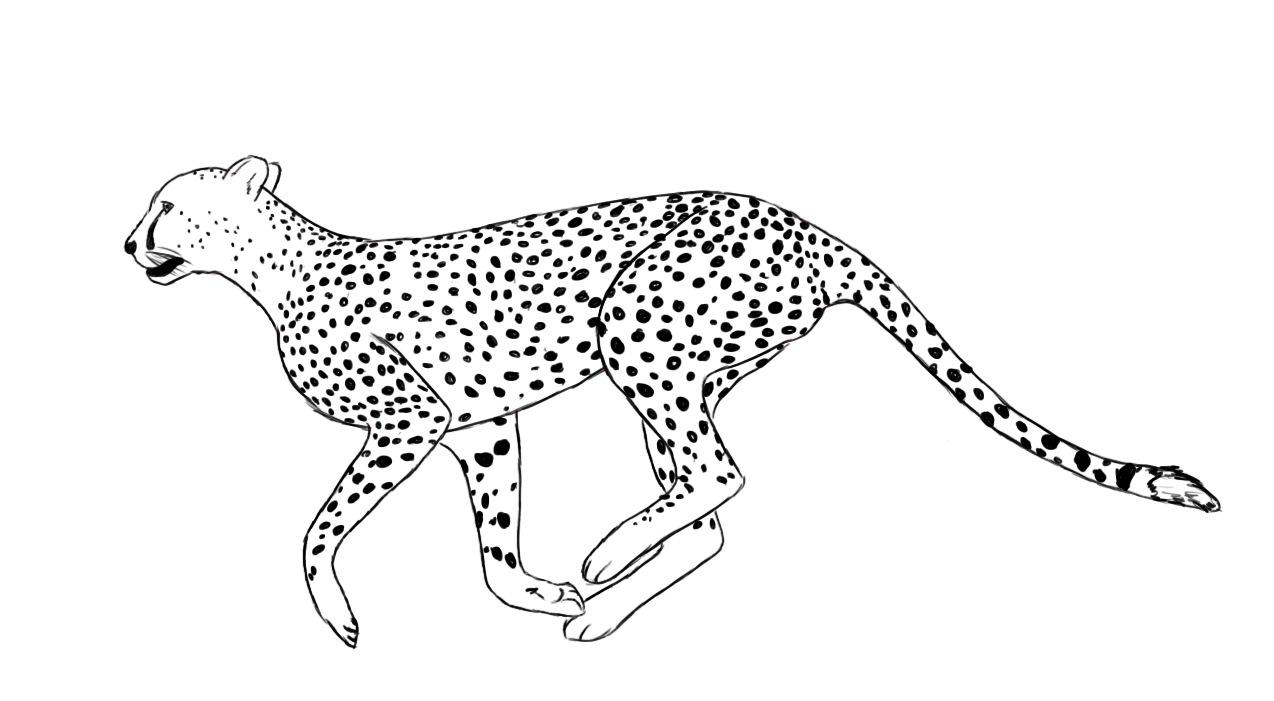 Cheetah clipart black and white, Cheetah black and white.