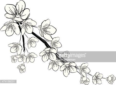 Cherry Blossoms Black and White premium clipart.
