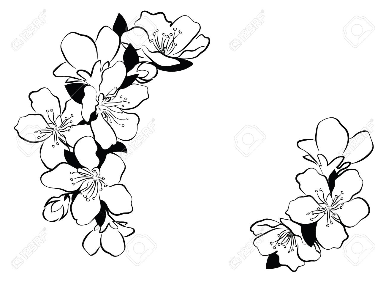 Blooming cherry. Sakura branch with flower buds. Black and white...