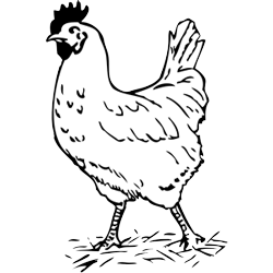 Free Chicken Clipart Black And White, Download Free Clip Art.