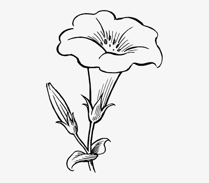 Black, Outline, Drawing, Flower, White, Flowers, Free.