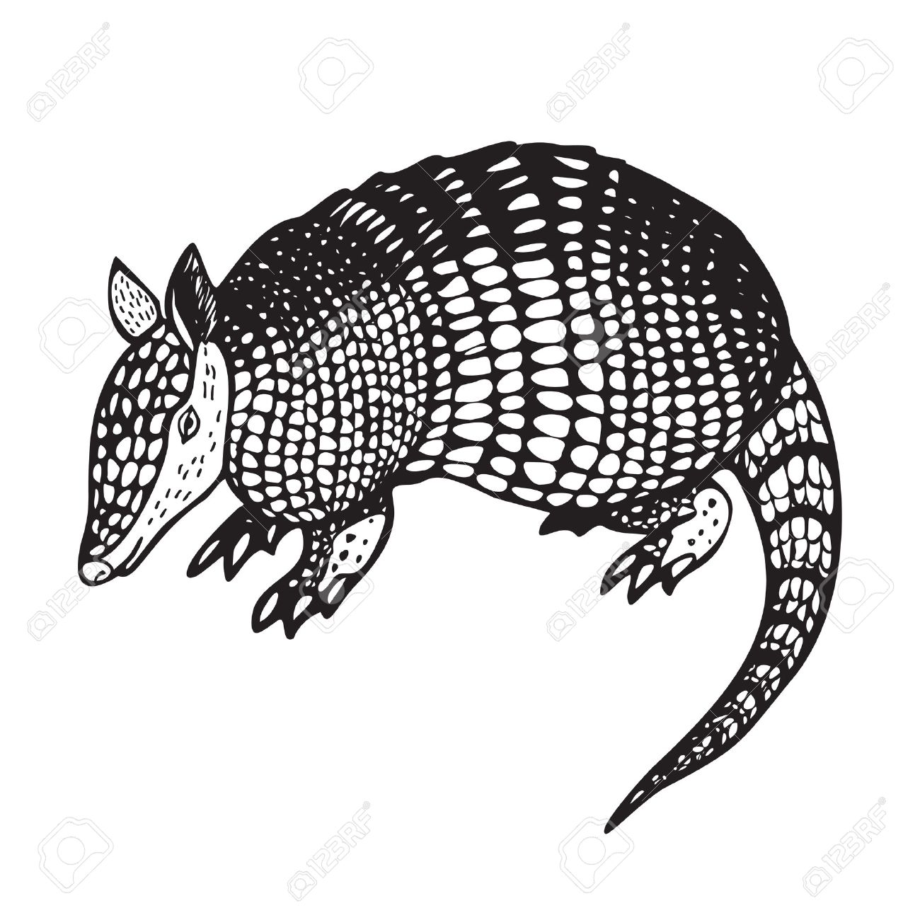Armadillo clipart black and white 3 » Clipart Station.