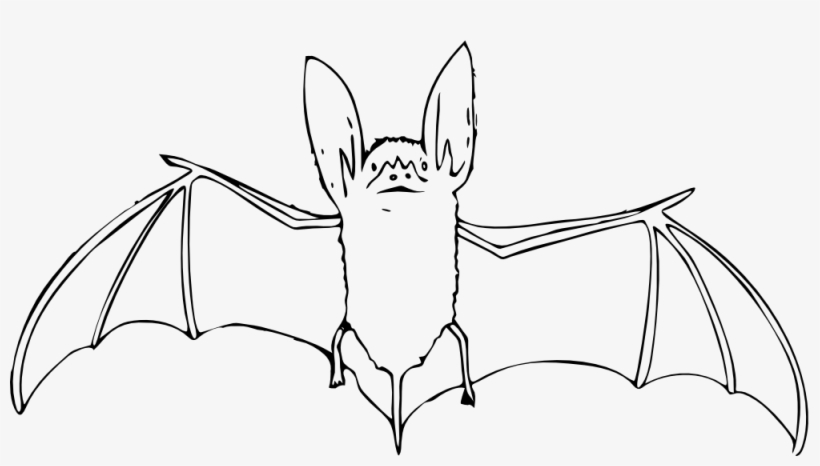 Net Clip Art Bat Black White Art Elish Halloween Svg.