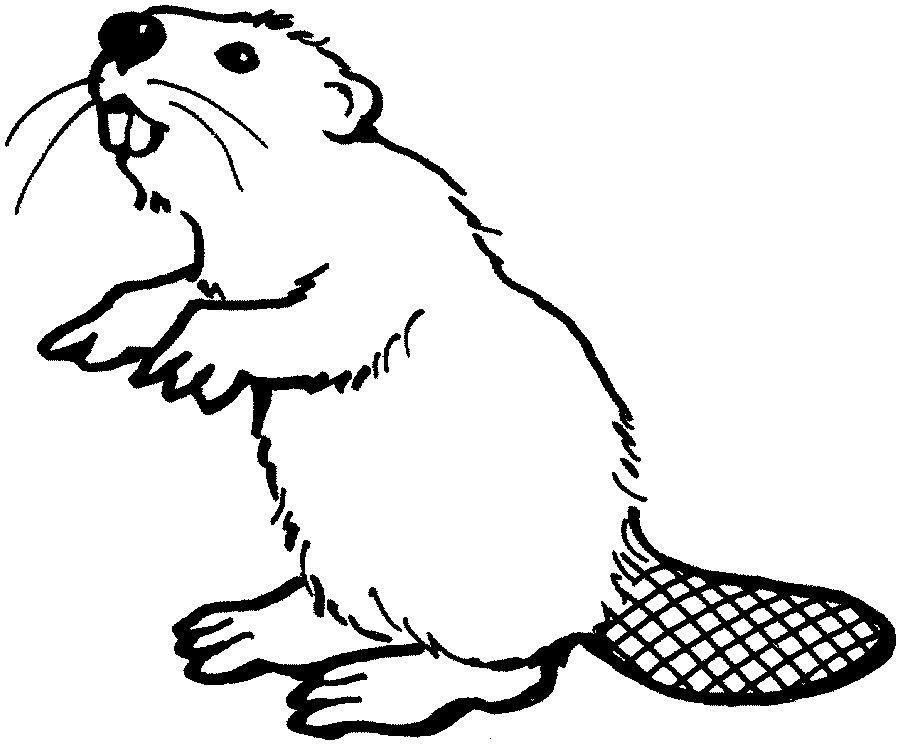 beaver drawings.