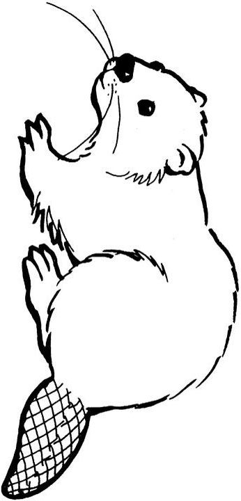 Beaver clipart black and white 5 » Clipart Station.