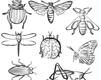 Black And White Clipart Of Insects.