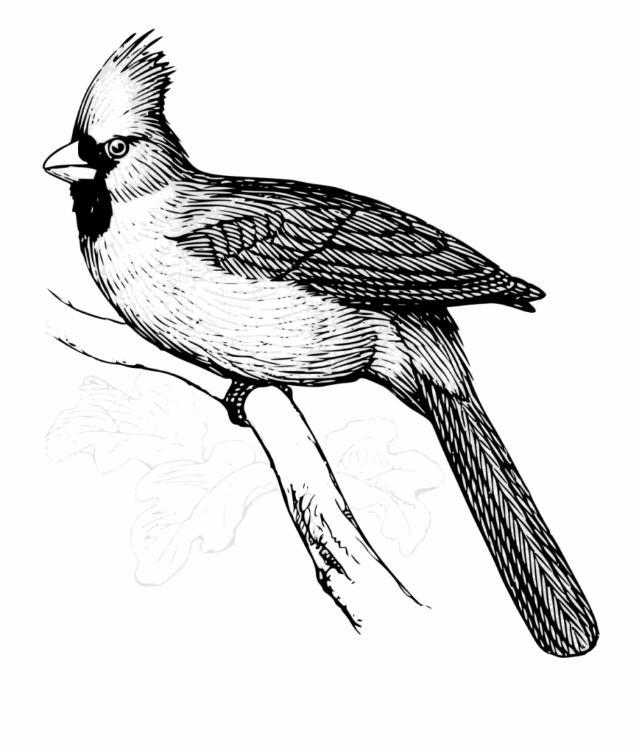 Free Cardinal Clipart Black And White, Download Free Clip.