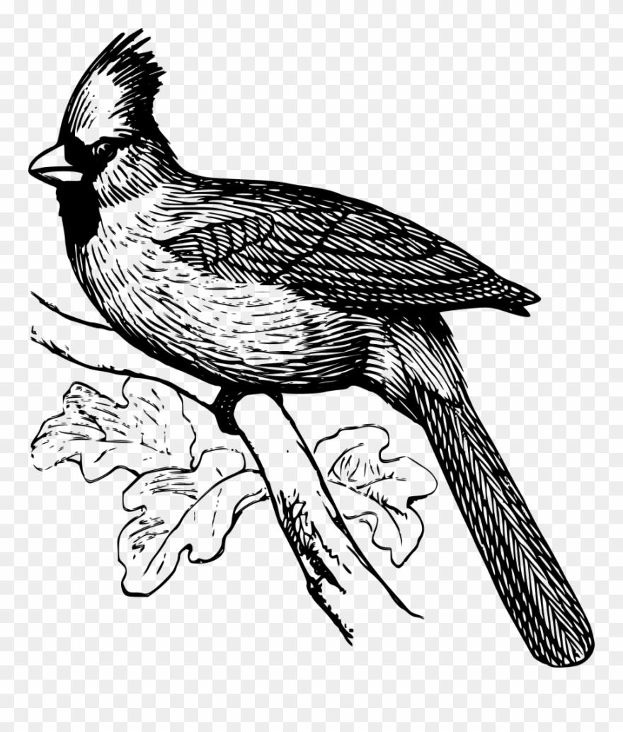 Cardinal Clip Art Download.