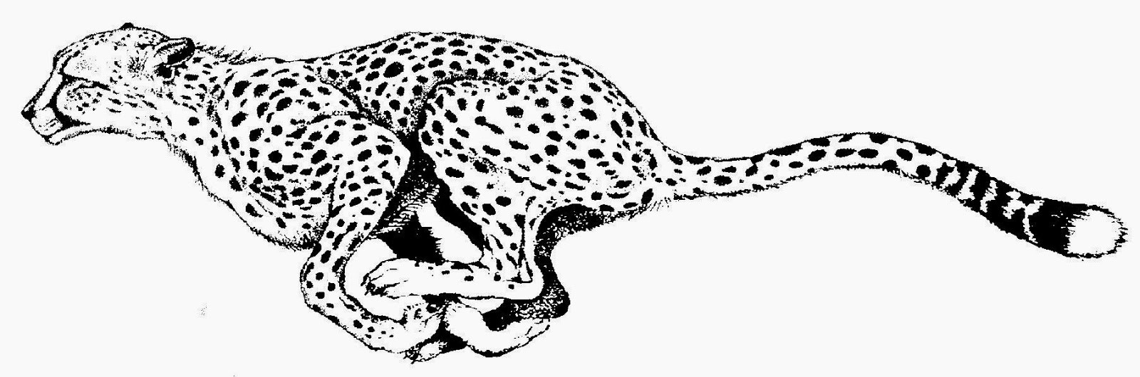 Cheetah black and white clipart 4 » Clipart Station.