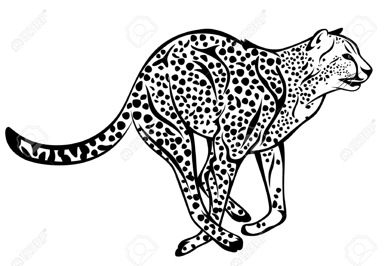 Cheetah black and white clipart 5 » Clipart Station.