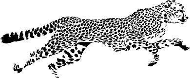 1260 Cheetah free clipart.
