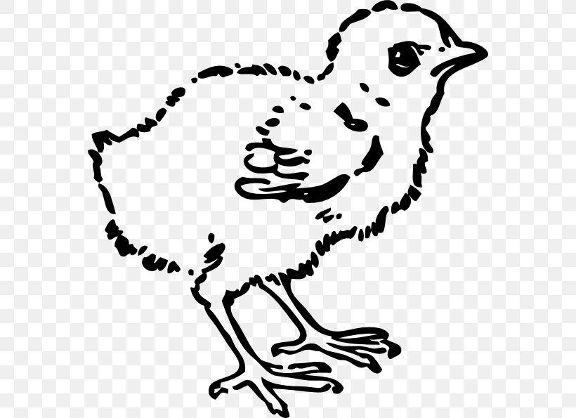 Chicken Black And White Clip Art, PNG, 570x595px, Chicken.