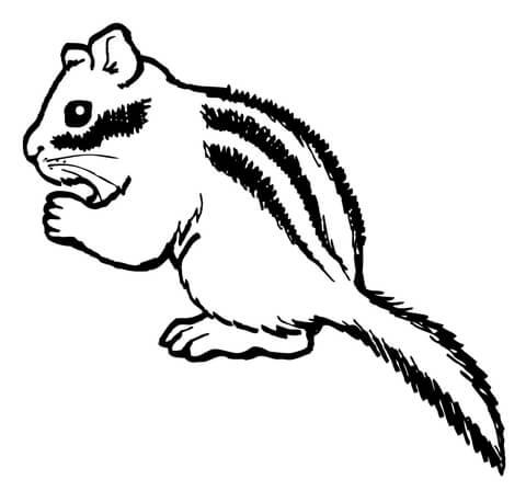Chipmunk Eating Nut coloring page.
