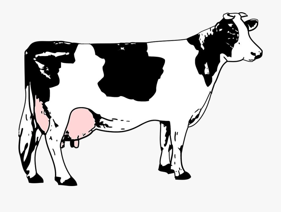 Black, Blanche, Cow, Grass, Noire, White.