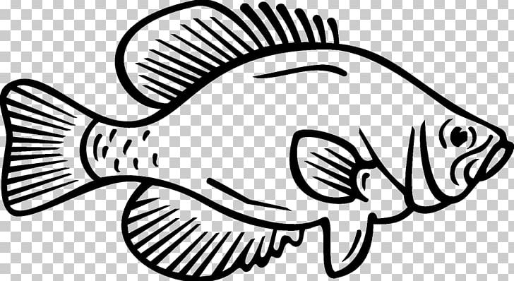 Coloring Book White Crappie Fish Black Crappie PNG, Clipart.