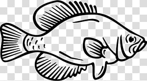 Crappie transparent background PNG cliparts free download.