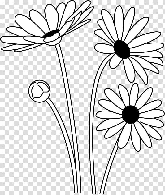 Oxeye daisy Black and white Argyranthemum frutescens.