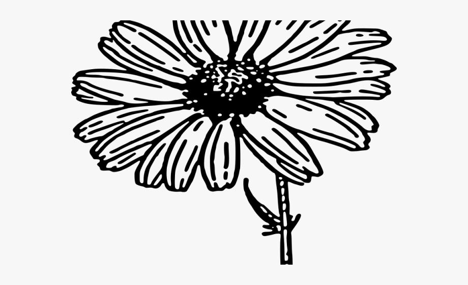 Daisy Clipart Daisy Flower.