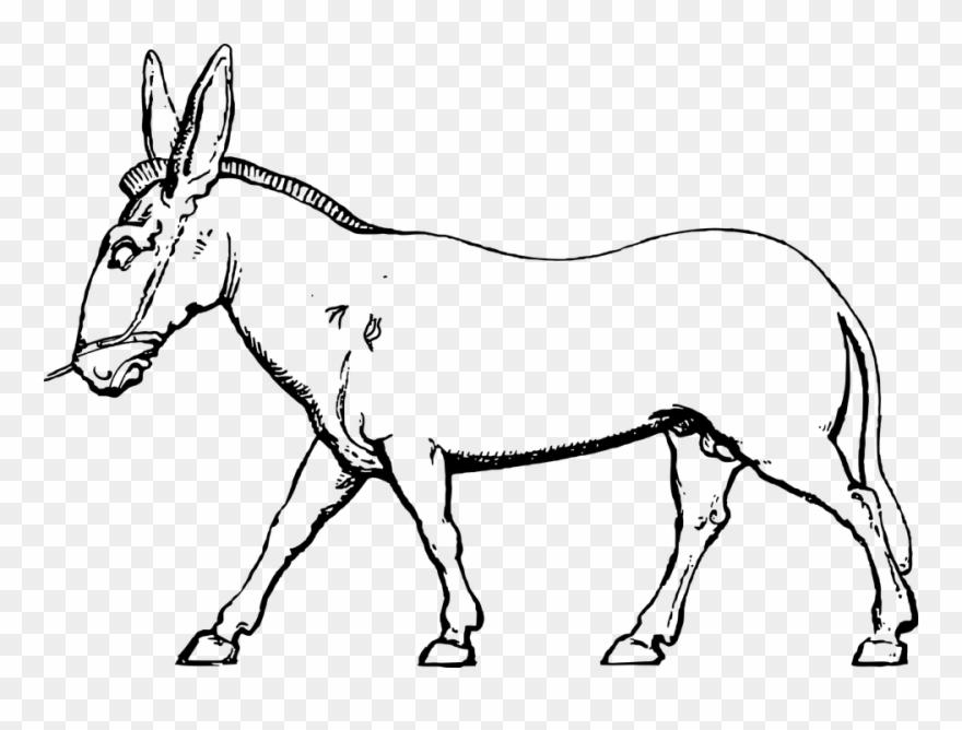 Donkey Mule Pack Animal Farm Animal Domestic.