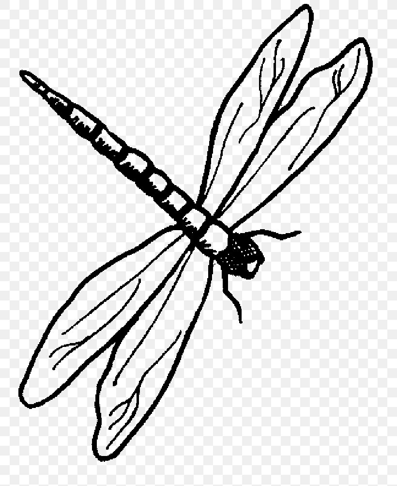 Dragonfly Drawing Animal Clip Art, PNG, 775x1003px.
