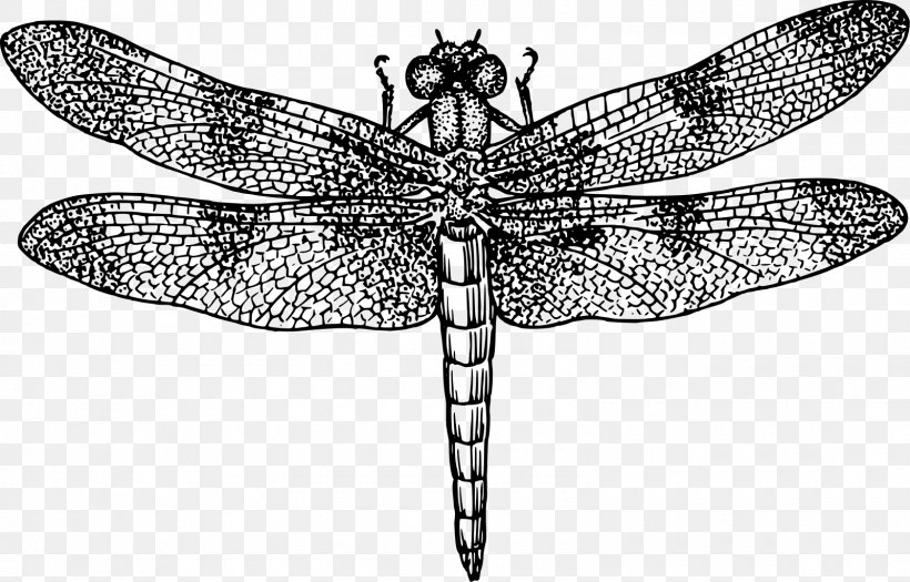 Dragonfly Black And White Drawing Clip Art, PNG, 1600x1026px.
