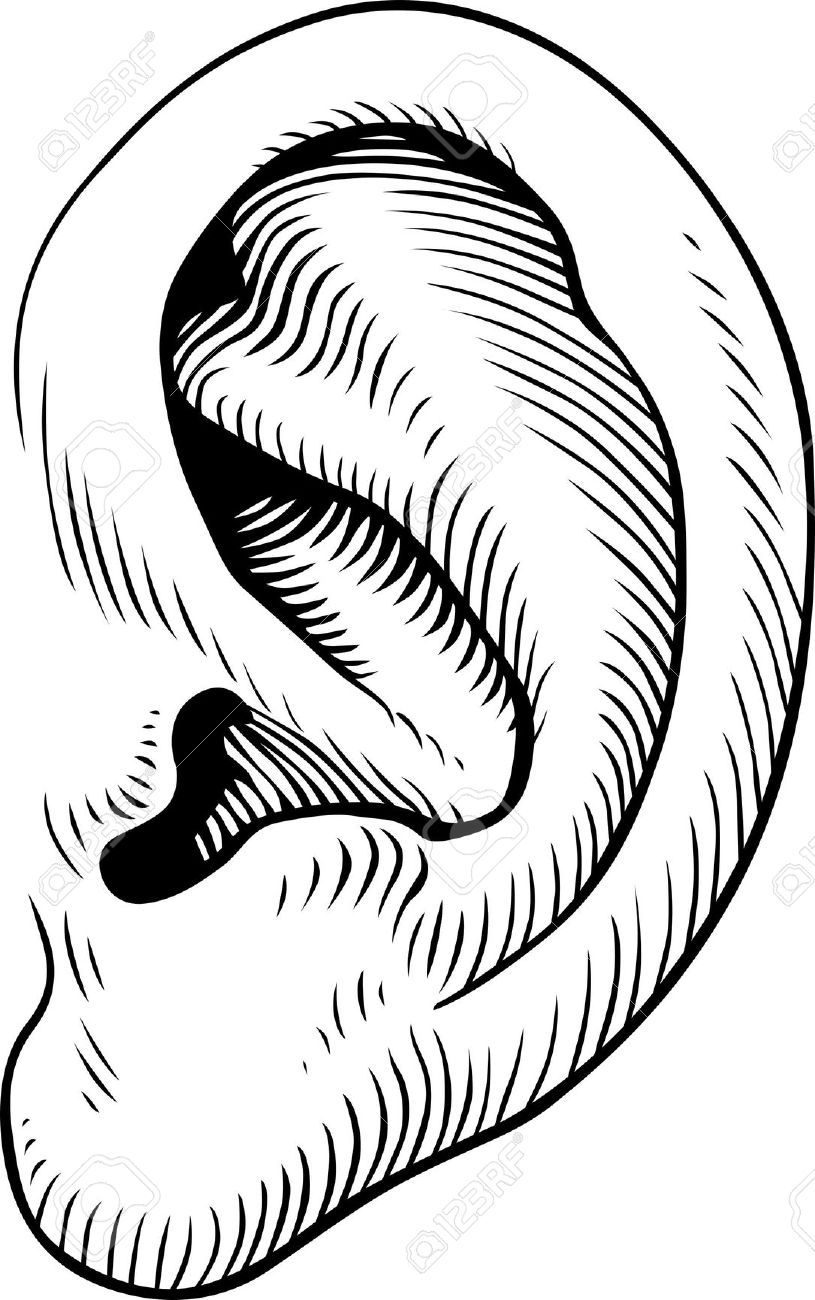 human ears clipart black and white.