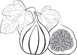 Fig Black And White Clipart.