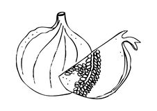 Fig clipart black and white 2 » Clipart Station.