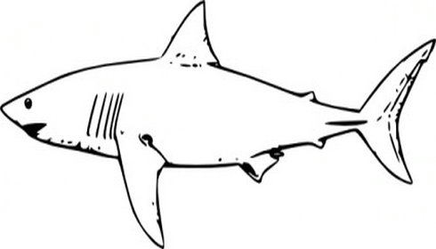 Shark Fin Clipart Black And White.