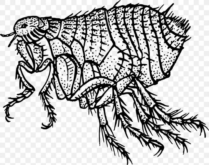 Flea Treatments Black Death Clip Art, PNG, 911x720px, Flea.