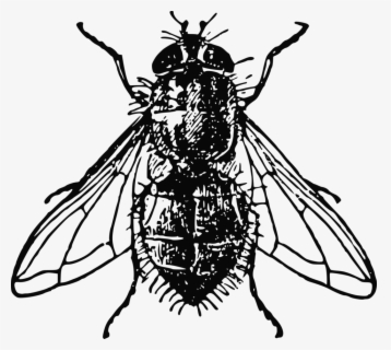 Free Fly Black And White Clip Art with No Background.