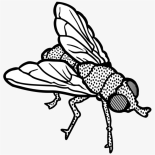 PNG Flying Insect Cliparts & Cartoons Free Download.