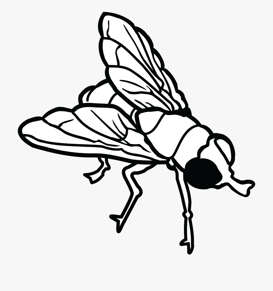 Free Clipart Of A Fly.