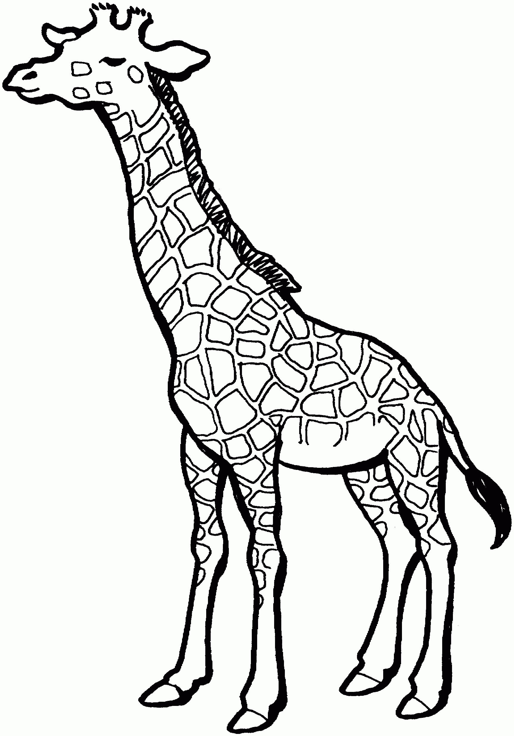 Black And White Clipart Giraffe.