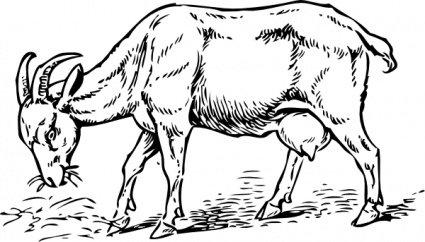 Goat Head Clip Art, Vector Goat Head.