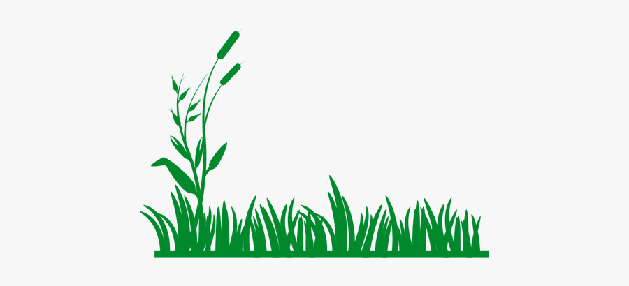 Grass Vector Background.