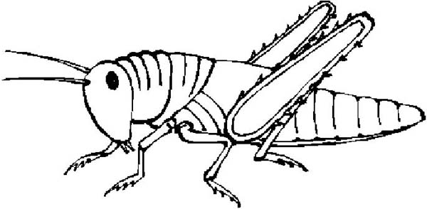 Free Black And White Grasshopper, Download Free Clip Art.