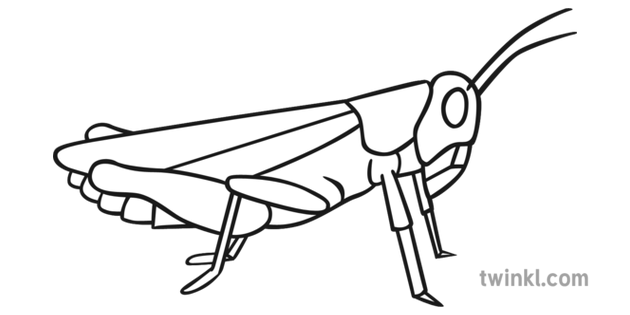 Black Grasshopper Black and White Illustration.