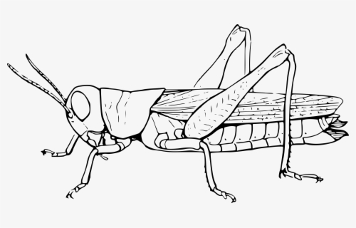 Free Grasshopper Black And White Clip Art with No Background.