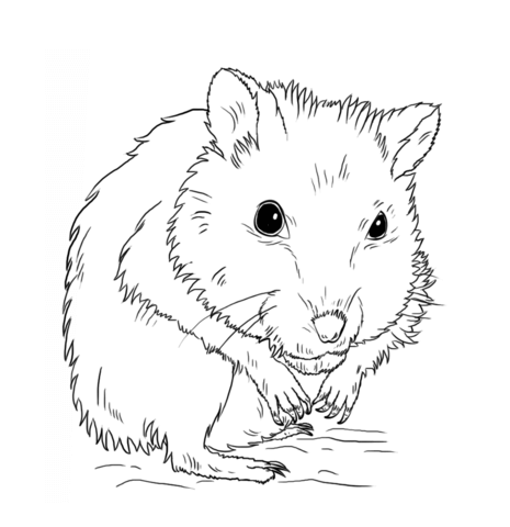 Hamster clipart black and white, Hamster black and white.